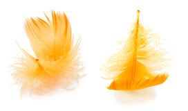 Two yellow feathers Royalty Free Stock Image