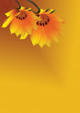 Two yellow flowers on yellow background Stock Photography