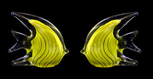 Two yellow glass stripped fish Royalty Free Stock Photos