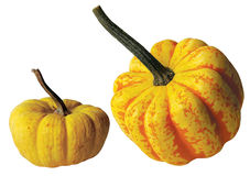 Two Yellow Gourds Stock Images