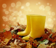 Two yellow gumboots standing in fallen  leaves Stock Images