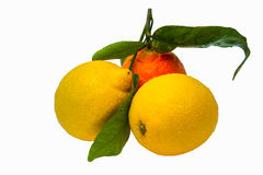 Two yellow lemons and one orange tangerine with gr Stock Images
