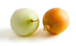 Two yellow onion bulbs. Isolated on a white background Stock Photos