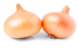 Two yellow onions Stock Image