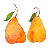 Two yellow  pears Royalty Free Stock Photography