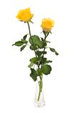 Two yellow roses. In vase on white background stock photography