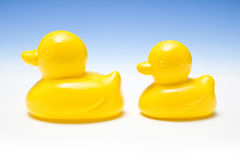 Two yellow rubber ducks Royalty Free Stock Photos