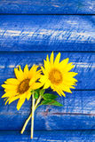 Two yellow sunflowers painted fence Stock Photography