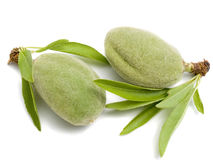 Two young almonds Royalty Free Stock Photography