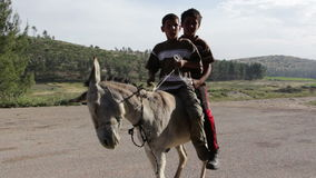Two young arab kids on a donkey. Close up of boys on donkey approaching the camera stock video footage