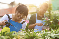 Two Young Asian Florist Working in the shop. Picture of Two Young Chinese Florist Working in the Shop Royalty Free Stock Photos