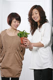 Two Young beautiful asia girl Royalty Free Stock Photos
