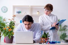 Two young botanist working in the lab. The two young botanist working in the lab royalty free stock images
