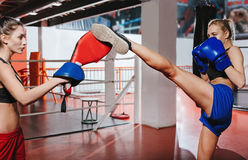 Two young boxers helping each other training royalty free stock photos