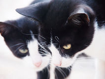 Two young cats  Stock Images