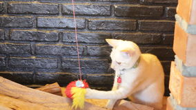 Two young cats playing toy in the smokestack display. Stock video stock video footage
