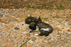 Two young cats sleeping on a walkway at the Andalusian Gardens a Royalty Free Stock Images