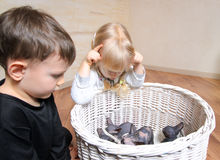 Two young children watching a litter of kittens. Two young children watching a litter of small grey and white sphynx kittens in a white wicker basket indoors in Stock Image