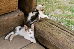 Two young cute little cats Royalty Free Stock Photos