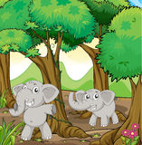 Two young elephants in the forest Stock Photography