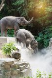 Two young elephants playing Stock Photos