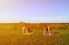 Two young fair-haired girls in sports suits practice yoga on a picturesque green hill in the open air in the evening stock photo