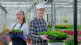 Two young farmers, an agronomist or a florist in a plaid work shirt and apron are holding green plants in the background. Of a large bright greenhouse stock video footage
