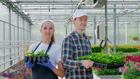 Two young farmers, an agronomist or a florist in a plaid work shirt and apron are holding green plants in the background. Of a large bright greenhouse stock video