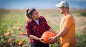 Two young farmers harvesting giant pumpkins at field - Thanksgiv Stock Photos