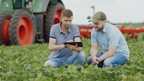 Two young farmers working on the field with soybeans. Use a tablet, in the background is a tractor. Two agronomists work in the field, studying the condition of stock video
