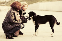 Two young fashion women and a dog on city street Stock Images