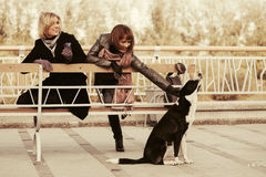 Two young fashion women and a dog Stock Photography