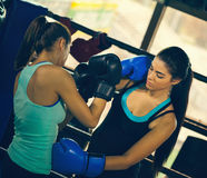 Two Young Female Boxers At Training Stock Photography