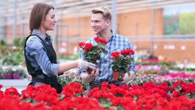 Two young florists working at flowers shop. Florists satisfied with their work. Gardeners working with flowers in greenhouse. Young smiling florists men and stock video
