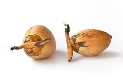 Two young fresh coconuts. On white background Royalty Free Stock Photos