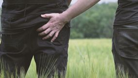 Two young gays walking in the field of green wheat. One gay strikes another on the buttocks.  stock video