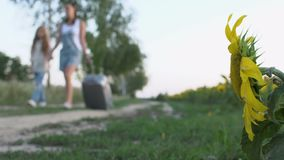 Two young girls with suitcase walks on the path near the sunflowers field. The camera moves from the right to the left and focuses on the sunflower at the field stock video