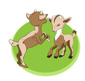 Two young goats Royalty Free Stock Photography