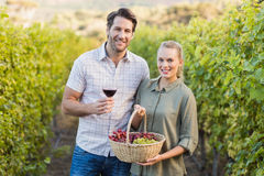Two young happy vintners holding a basket of grapes and a glass of wine. In the grapes fields Stock Photography