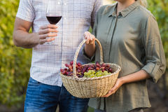 Two young happy vintners holding a basket of grapes and a glass of wine. In the grapes fields Royalty Free Stock Images