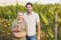 Two young happy vintners holding a basket of grapes Stock Photography