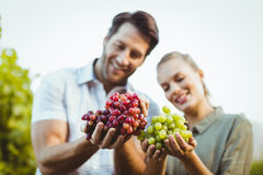 Two young happy vintners holding grapes Royalty Free Stock Photos