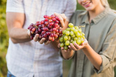 Two young happy vintners holding grapes Stock Photos