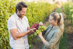 Two young happy vintners holding grapes Royalty Free Stock Photo