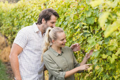 Two young happy vintners looking at grapes Stock Image