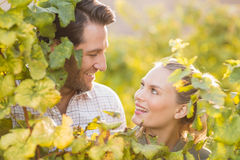 Two young happy vintners looking up from behind grape plants Royalty Free Stock Photo