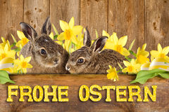 Two young hare sitting between daffodils Royalty Free Illustration