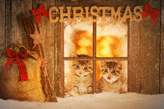 Two young kitten looking curiously out of a window. With christmas decoration Stock Photos