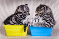 Two young kittens looking at each other while in trays Stock Photos