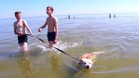 Two young men walk with the dog in the sea stock video